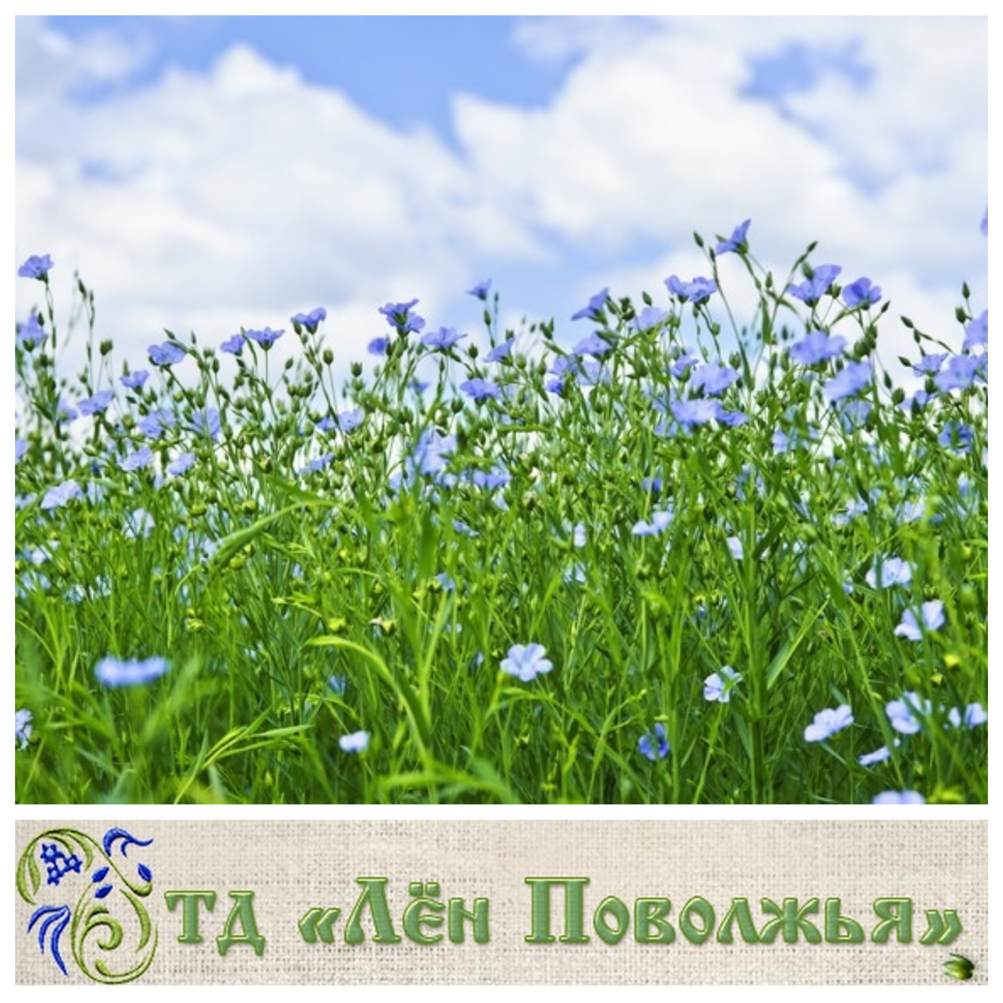 7d3619e207a3 Лён Поволжья - столовое и постельное бельё, шторы, сувенирные изделия из  льна. - Совместные покупки по всей России